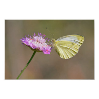 Butterfly feeding on flower poster