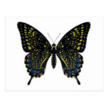 Butterfly Fictional Swallowtail Postcard