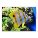 Butterfly fish card