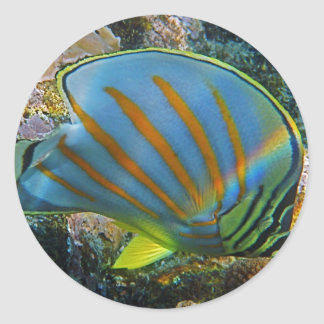 Butterfly Fish Classic Round Sticker