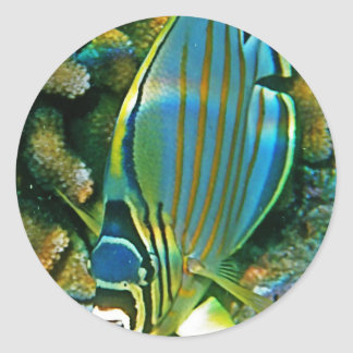 Butterfly Fish - Front facing Classic Round Sticker