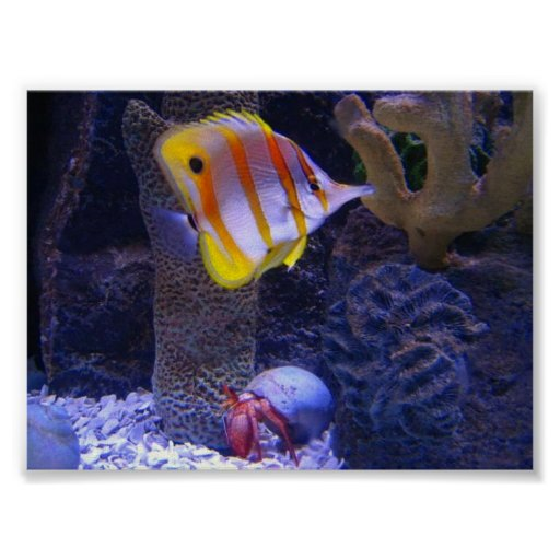 Butterfly Fish Photo Poster