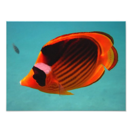 Butterfly Fish Photo Print
