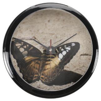 Butterfly Fish Tank Clocks