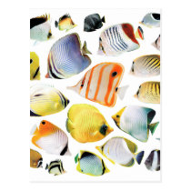 Butterfly fishes postcard