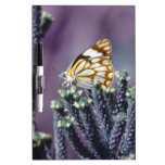 Butterfly Flitter Flutter vintage Dry Erase Board