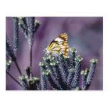 Butterfly Flitter Flutter vintage Post Cards