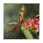 Butterfly Flower Ceramic Tile