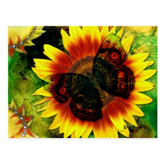 Butterfly Flower Postcard
