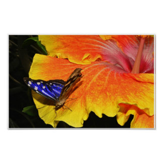 Butterfly /Flower Poster