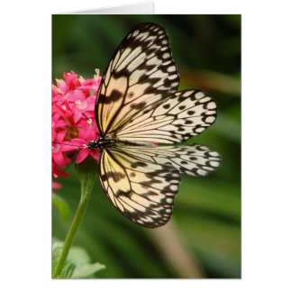 Butterfly Flowers 1 Card