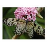 Butterfly Flowers 2 Postcard