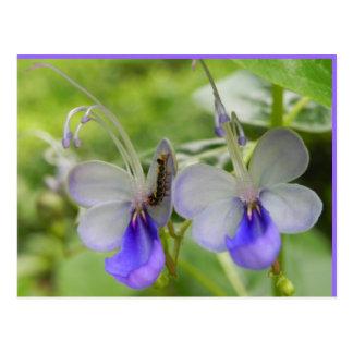 Butterfly flowers and caterpillar postcard