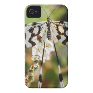 Butterfly Flowers Blossoms Wedding Shower Peace iPhone 4 Case-Mate Case