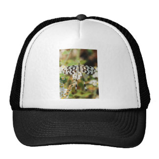 Butterfly Flowers Blossoms Wedding Shower Peace Mesh Hat
