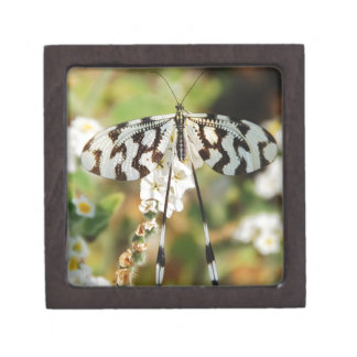 Butterfly Flowers Blossoms Wedding Shower Peace Premium Jewelry Box