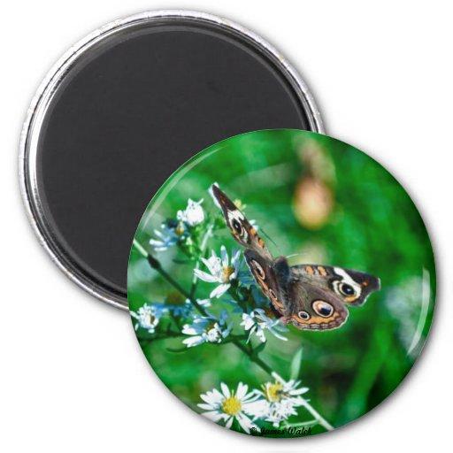 Butterfly & Flowers Fridge Magnets