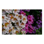 Butterfly Flowers Pink White and Purple Floral Poster