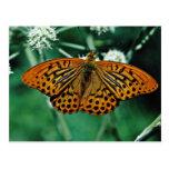 Butterfly  flowers postcard