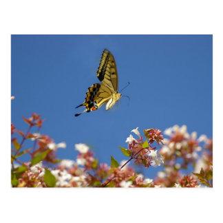 Butterfly Fluttering Postcard