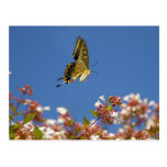 Butterfly Fluttering Postcards