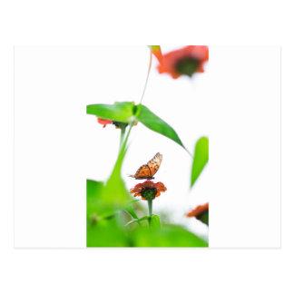 Butterfly fly postcard