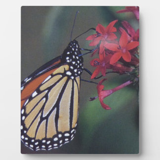 butterfly flying around red flower plaque