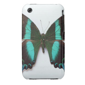 Butterfly found in regions of Asia and India Case-Mate iPhone 3 Case