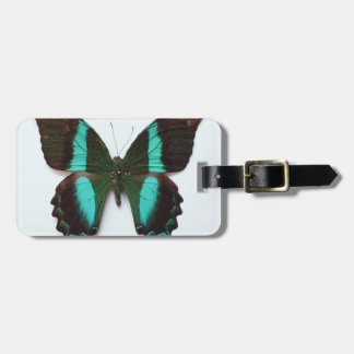 Butterfly found in regions of Asia and India Luggage Tag