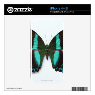 Butterfly found in regions of Asia and India iPhone 4 Decals