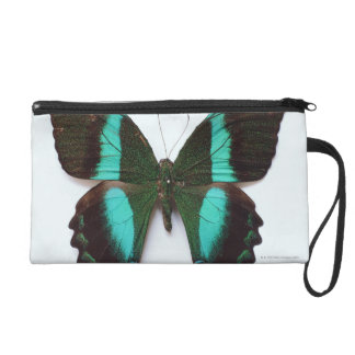 Butterfly found in regions of Asia and India Wristlet Purse