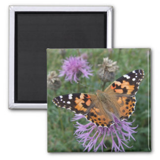Butterfly Fridge Magnets