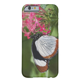 Butterfly from Africa Barely There iPhone 6 Case