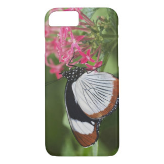 Butterfly from Africa iPhone 8/7 Case
