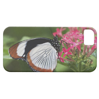 Butterfly from Africa iPhone SE/5/5s Case