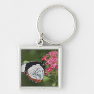 Butterfly from Africa Keychain
