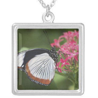 Butterfly from Africa Square Pendant Necklace