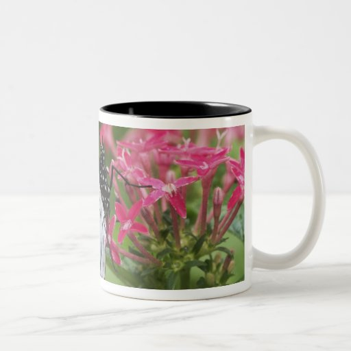 Butterfly from Africa Two-Tone Coffee Mug