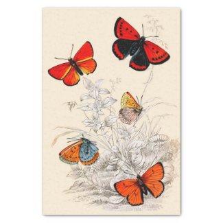 """Butterfly Garden 10"""" X 15"""" Tissue Paper"""