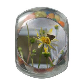 Butterfly Garden 2 Jelly Belly Candy Jar