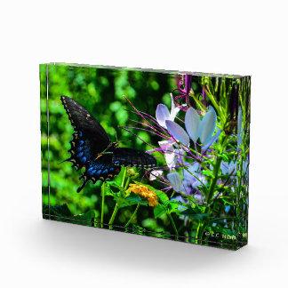Butterfly Garden Moment Acrylic Award
