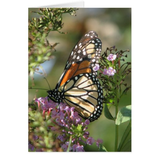 Butterfly Garden Series Greeting Cards