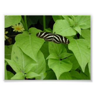 Butterfly Gardens 6 Poster