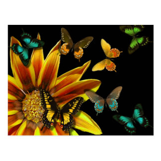 Butterfly Gardens Postcard