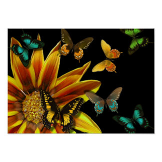 Butterfly Gardens Poster