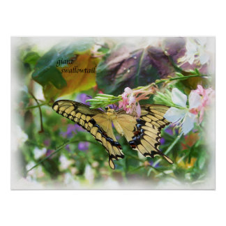 butterfly_giant_swallowtail_1997h_Painting Posters