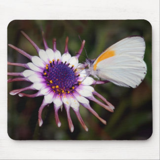 Butterfly gifts mousepads