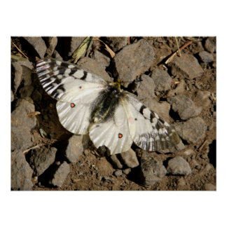 Butterfly Gravel Poster