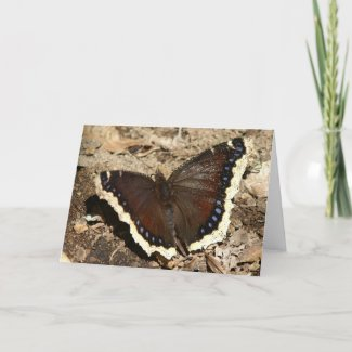 Butterfly, Greeting Card. Card