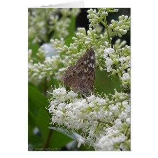 Butterfly : Hackberry Emperor Card